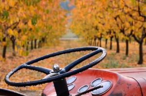 88238020-Tractor-Wheel.jpg